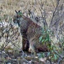 Spain Lynx Quest tour