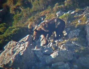In Search of the Littlest Grizzly in the Somiedo Natural Park: 2013 Trip Report