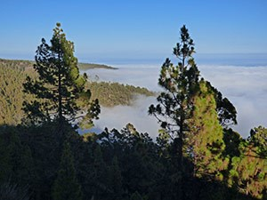 Sea of cloud from Canary Pine forest on Tenerife © John Muddeman