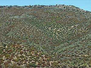 Colourful-hillside-scrub-An © John Muddeman