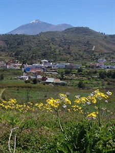 View of Mt Teide from NW Tenerife © John Muddeman