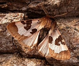Summary of the Picos de Europa Lepidoptera Study, 2008