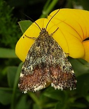 Summary of the Picos de Europa Lepidoptera Study, 2009