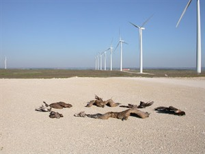 Wind farm threatens Monfrag&#252;e National Park raptors and other threatened Extremaduran wildlife